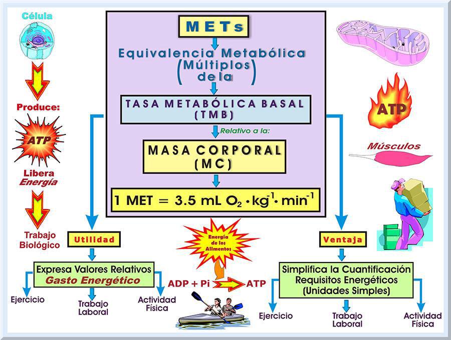 ralentizar metabolismo experiencia